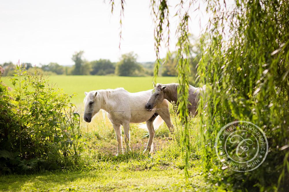 minneapolis barn farm wedding photo 31 Barn, Farm, River + Woods Wedding Minneapolis MN | Shane + Mandy